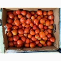 Продам томат сливовидный, любая форма оплаты, только самовывоз уже не большие обьемы