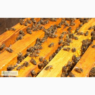 Пчелопакеты карпатской породы 3+1