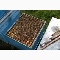 Пчелопакеты карпатской породы с доставкой