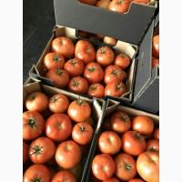 Продам помидор тепличный от Беларусского поставщика