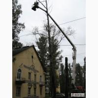 Аварийный спил деревьев 4665942, удаление аварийных деревье