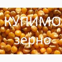 Постійно купуємо кукурудзу з господарств і у виробників для власної переробки