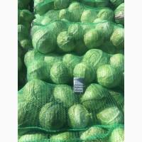 Крупный опт белой капусты. Минимальный заказ от 10 т. Вес головки до 3 кг