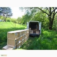 Пчелопакеты на апрель с доставкой по всей Украине, пчеломатки - карпатка 2019