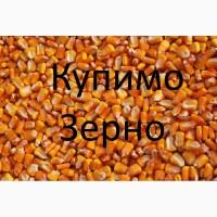 Закуповуємо кукурудзу по Виноградівському районі