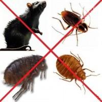 Уничтожение тараканов, блох, клопов, крыс и мышей