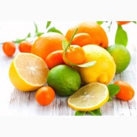 Продажа цитрусовых оптом: мандарин
