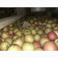 Продам яблоки на переработку от производителя
