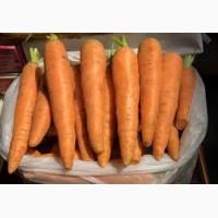 Продам морковки