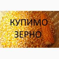 Постійно закупляєм кукурудзу подрібнену (крупку), відходи кукурудзи