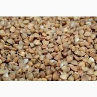 Продам семена гречихи Юбилейная 100
